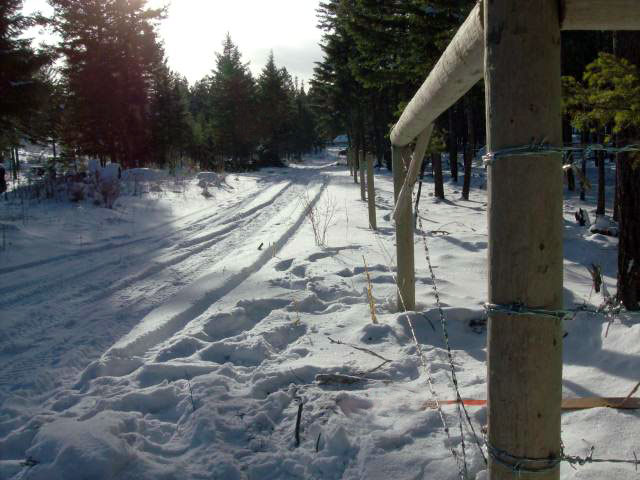 Forestry Fencing